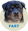 Fart From House Rotvis
